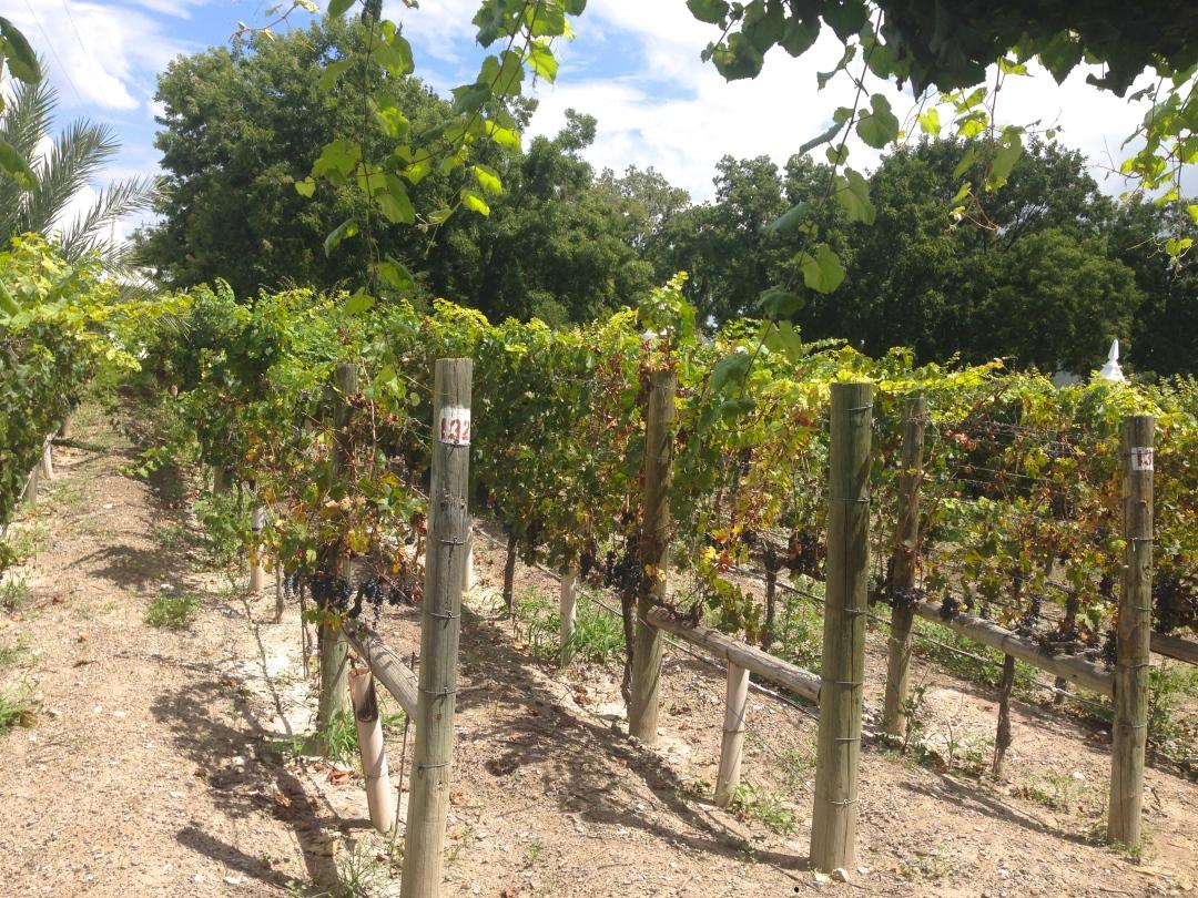 casa-madero-viñedos