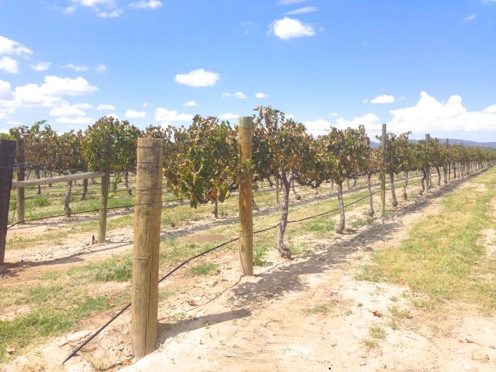 Casa-Madero-vinos